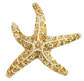 3 1/2 Inch Starfish Knob (Antique White Finish)
